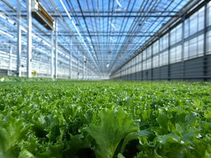 First Harvest OZ Fund Launches With Focus On Indoor Farming
